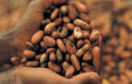 Church Of Pentecost Accepts Cocoa Beans As Tithes From Cocoa Farmers