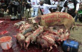 C/R: Outbreak of African Swine Fever Confirmed