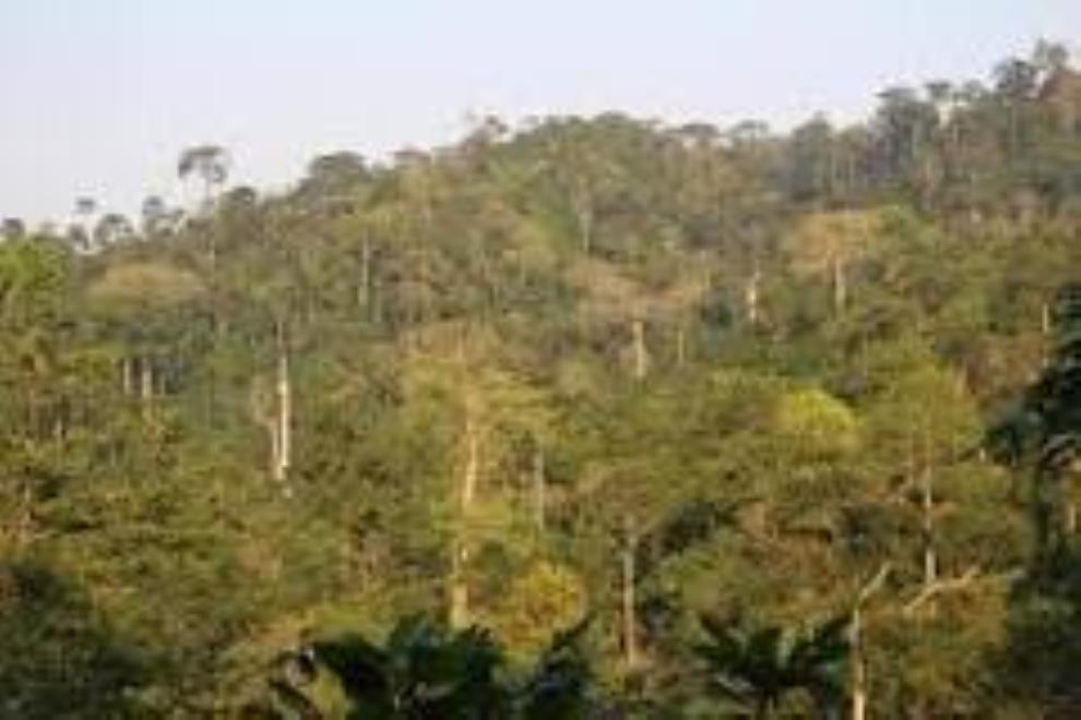 Make Atewa Forest A National Park … Concerned Citizens