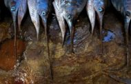 Namibia ministers resign over fishing bribe allegations