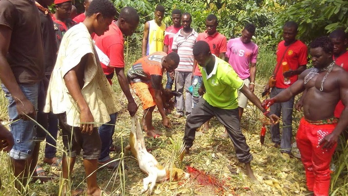 Dog slaughtered to reverse curse on EC boss