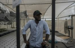 Young, rich and ambitious: Nigeria's 'gentleman farmers'