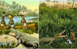 How Black Babies Were Used As Alligator Bait By Hunters In America [Bitter History]